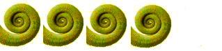 Copia Magazine Tails