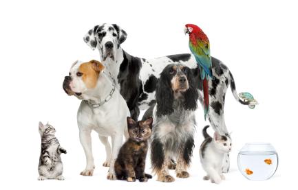 Copia Magazine Pets